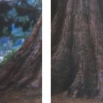 Tree trunk seperation